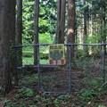 写真: 危険な森