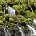 写真: 苔の美しい伏流水