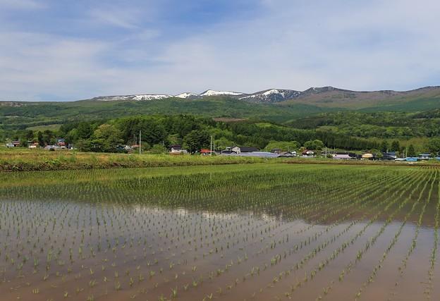 写真: 里の田んぼ