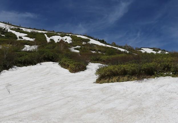 写真: 八幡平の雪渓