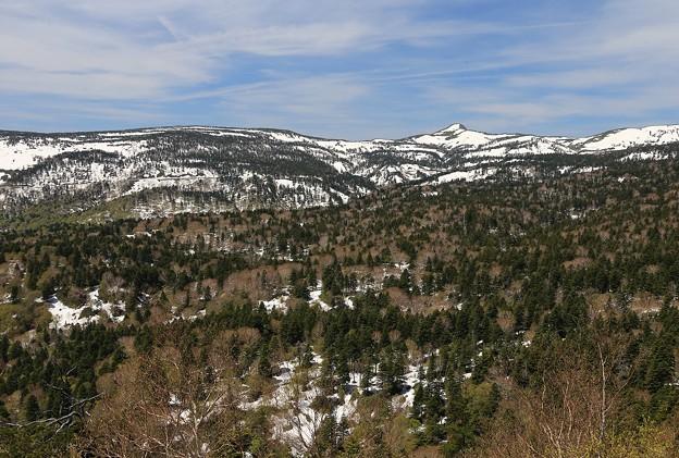 写真: 雪残る樹海