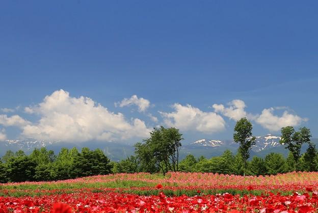 写真: そよ風吹くお花畑