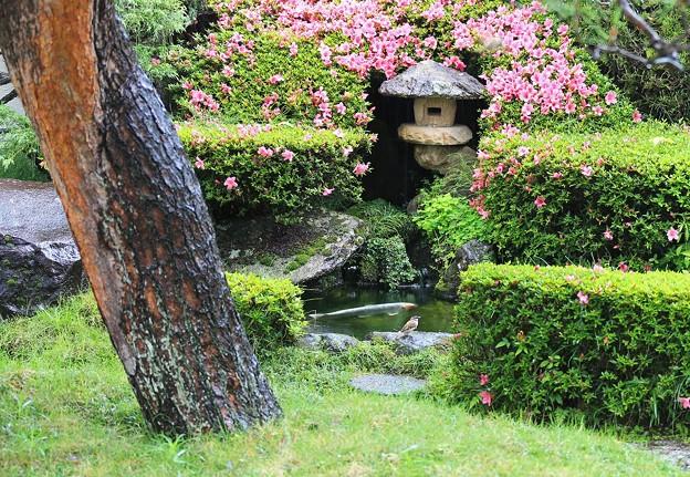 Photos: 雨降る庭池