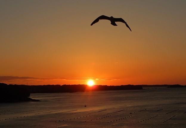 写真: 朝陽にカモメ舞う