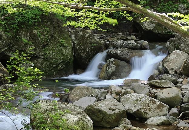 写真: 清涼な渓流