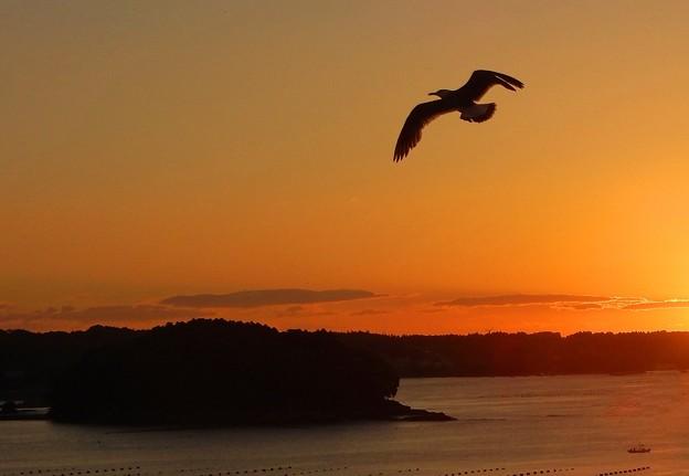 写真: 朝焼けにカモメ舞う