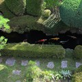 写真: 清涼の池