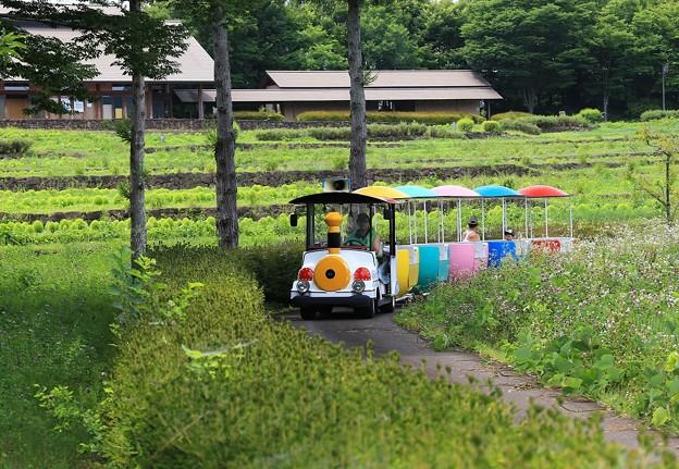 Photos: 夏休み