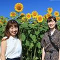 Photos: ひまわり娘