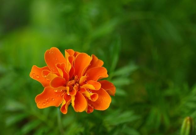 写真: 真心の花