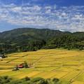 写真: 広大な椹平棚田