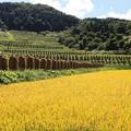 写真: 山里の大蕨棚田