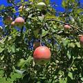写真: リンゴの詩