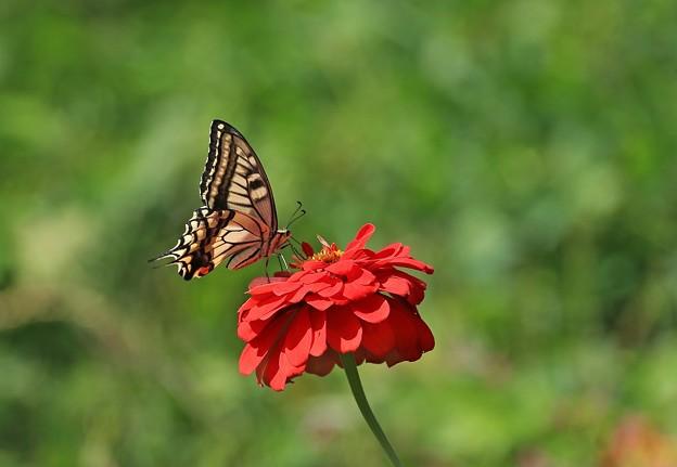写真: 蝶に会いたくて