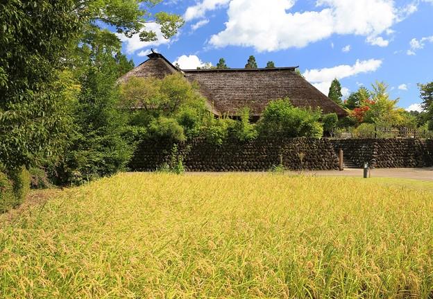 写真: 黄金色のふるさと村