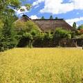 黄金色のふるさと村