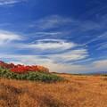 写真: 涼風吹く弥陀ヶ原