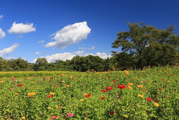 写真: 広大なお花畑