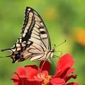 写真: 蝶の素顔