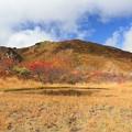 写真: 栗駒山の池塘