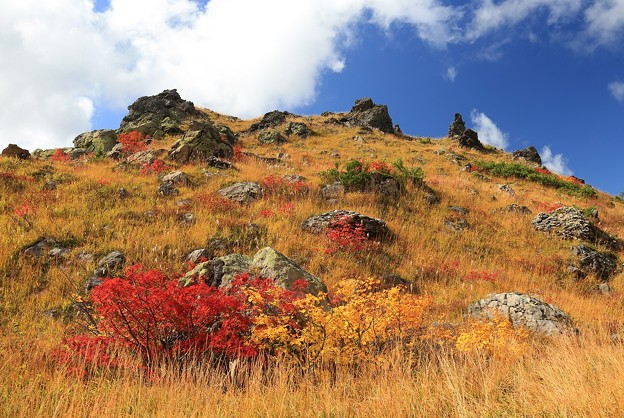 Photos: 紅葉の味わい深さ