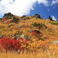 写真: 紅葉の味わい深さ