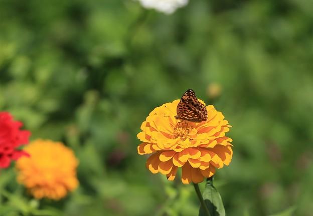 写真: 花の楽園
