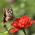 蝶のつぶやき