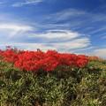 写真: 紅葉盛りの月山