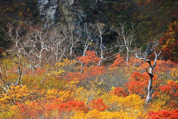 Photos: 秋彩々