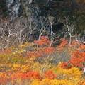 写真: 秋彩々