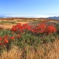 写真: 雲上の紅葉