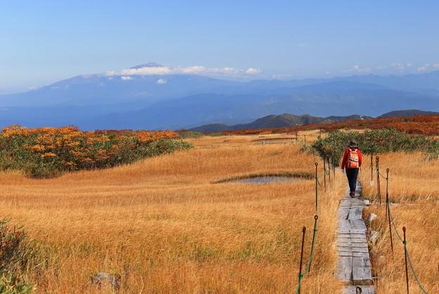 草紅葉の湿原を行く