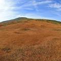 写真: 草紅葉の山肌