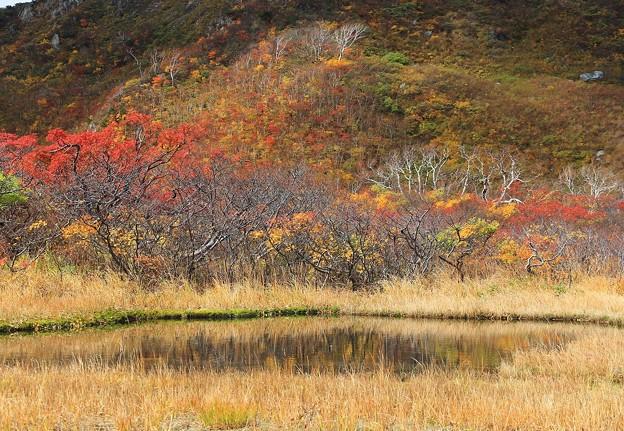写真: 紅葉の美風景