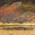 紅葉の美風景