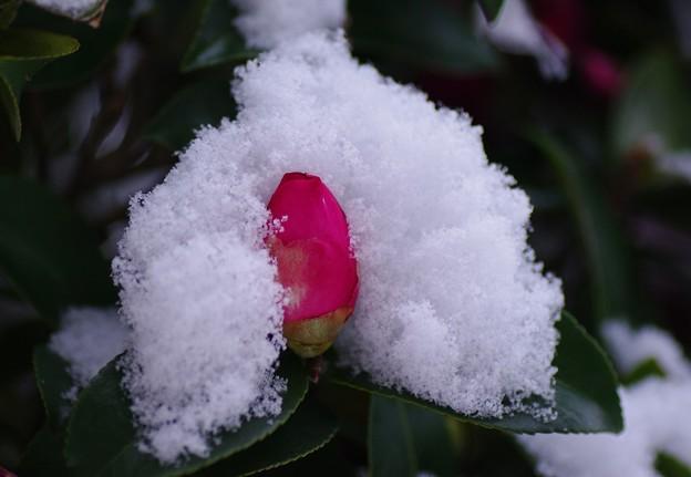 初雪に冷やされて