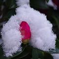 写真: 初雪に冷やされて