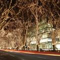 写真: 杜の都は光の都に