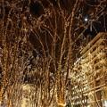 Photos: 月夜の煌き