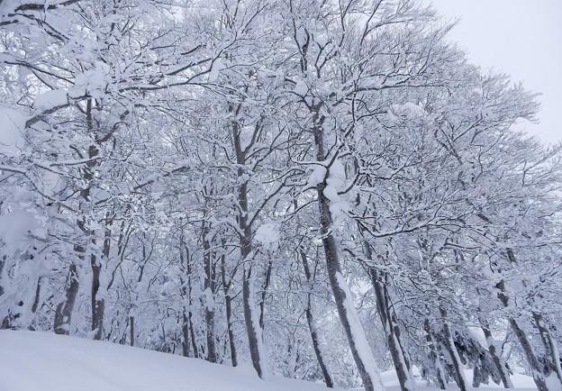 Photos: 高原の霧氷