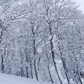 写真: 高原の霧氷