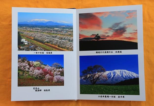 写真集・春の情景