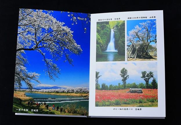 写真集・桜のころ