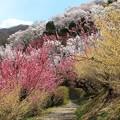 Photos: 夢の花道