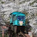Photos: 桜電車