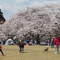 Photos: 桜と遊ぶ