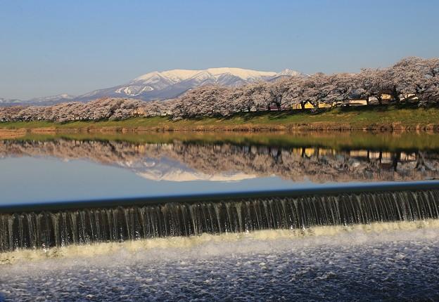 桜咲く春の流れ