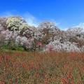 咲き誇る花の山
