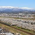 Photos: 桜咲くみちのく路